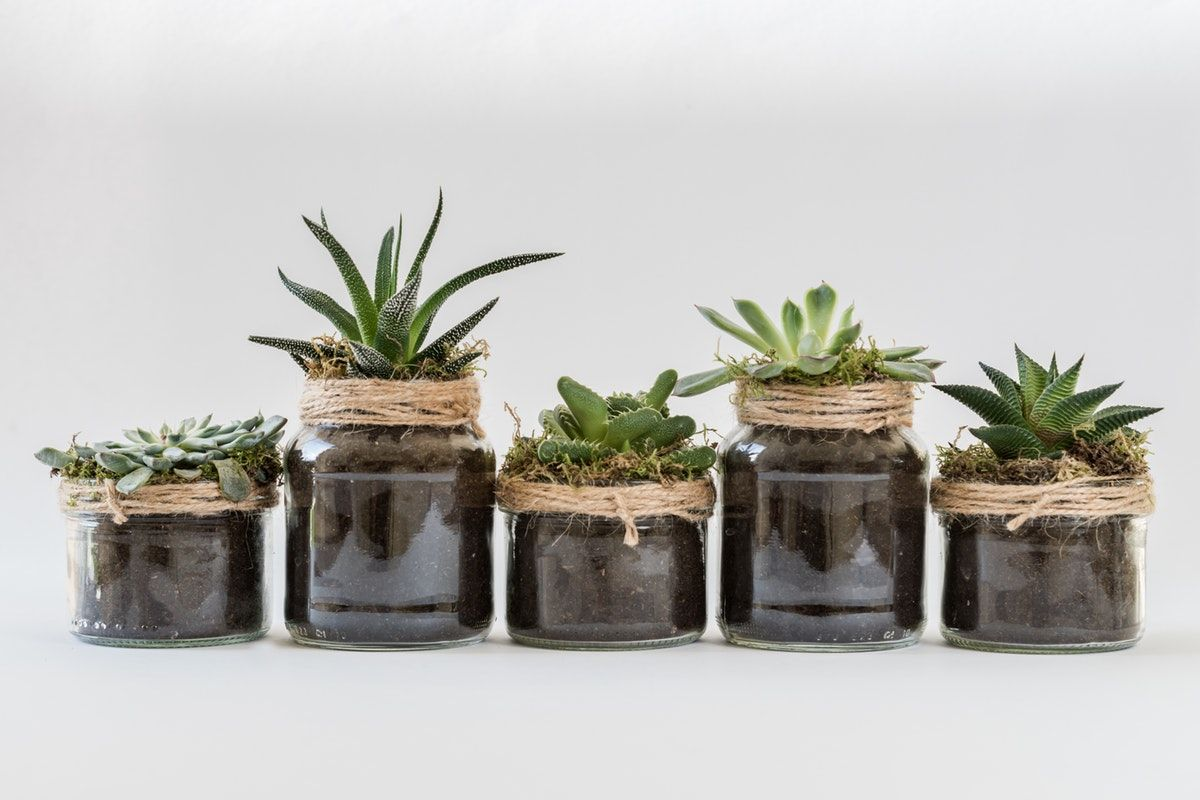 An Image of Succulents on Plantation Shutters Ltd