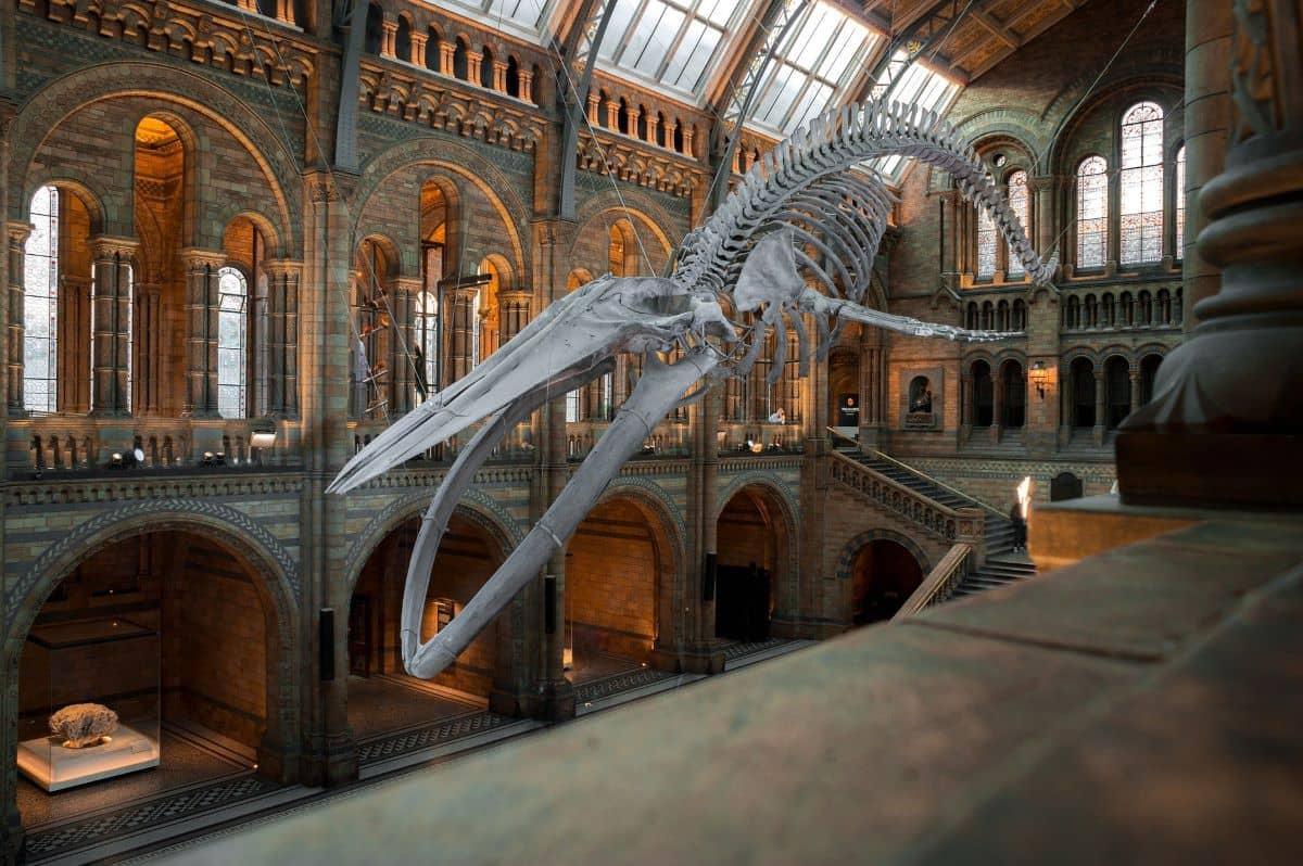 natural-history-museum-plantation-shutters-ltd